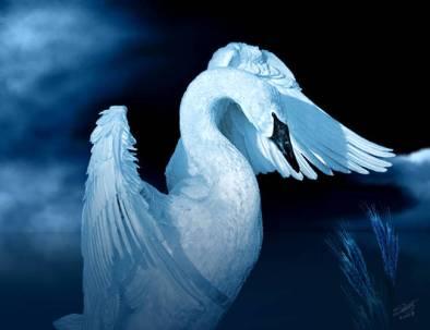 flailing-swan_art